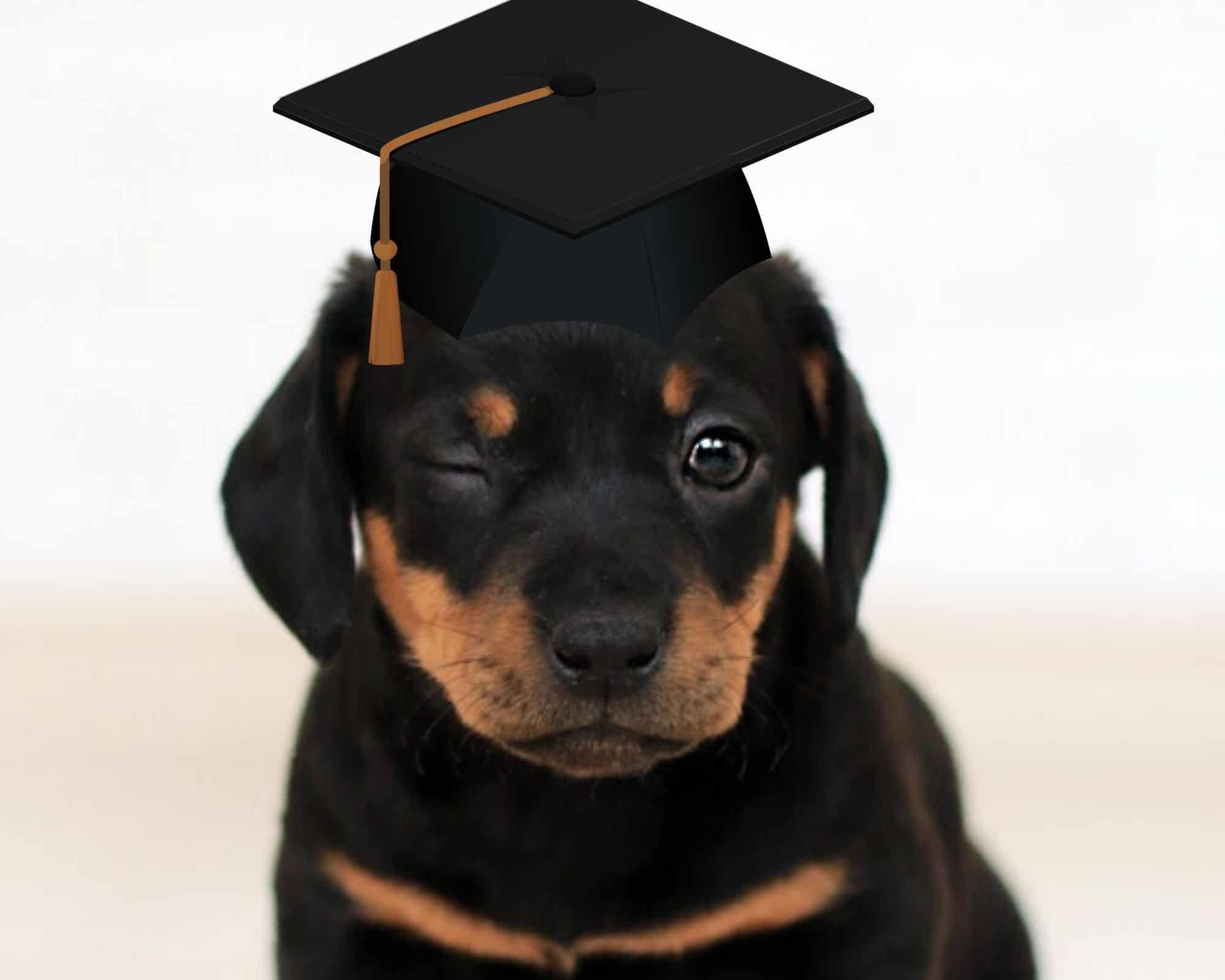 най-умните кучета