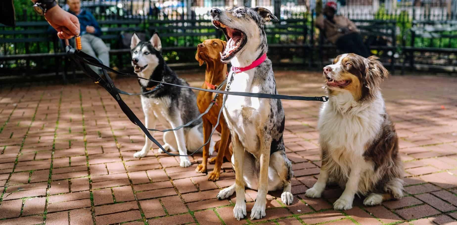 средни подори кучета