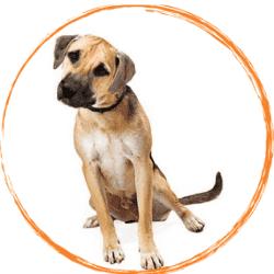 черномуцунесто куче