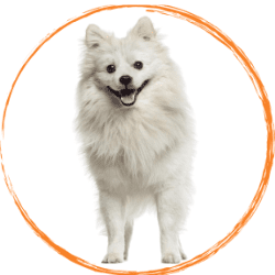 ескимоско куче