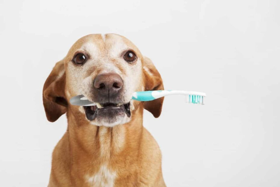 Как да мием зъбите на кучето си у дома