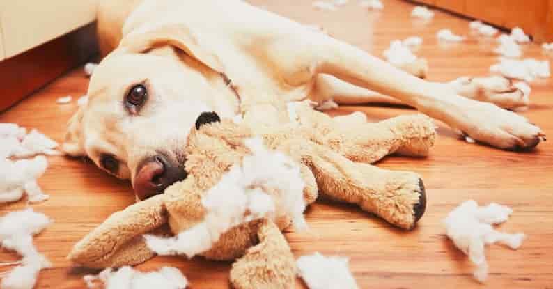 куче дъвче играчки